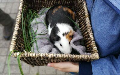 Pasaulinė gyvūnų minėjimo diena